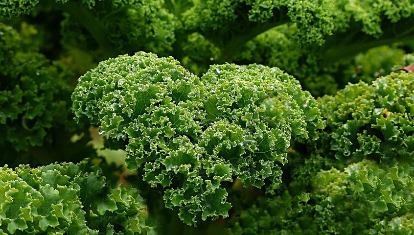 Propietats de la col Kale