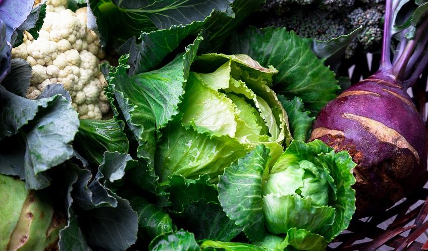 Crucíferes, les hortalisses d'hivern