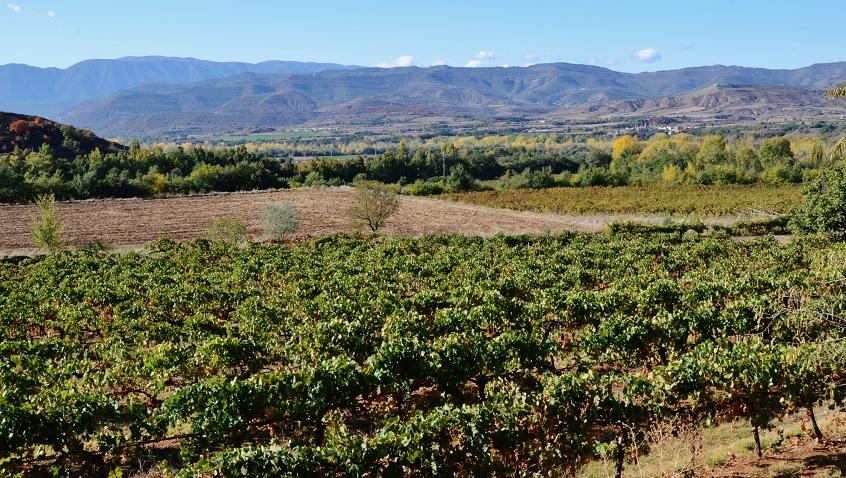 Viatjant per la DO Lleida-Costers del Segre